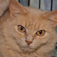 Adopt A Pet :: Josephine (bonded with Gillian) - Alexandria, VA