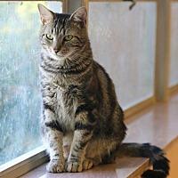 Adopt A Pet :: Tony - Bardstown, KY