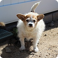 Adopt A Pet :: Meg Wylie Pearl - Yucca Valley, CA