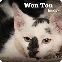 Adopt A Pet :: Won Ton - Glen Mills, PA