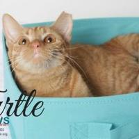 Adopt A Pet :: Turtle - Belle Chasse, LA