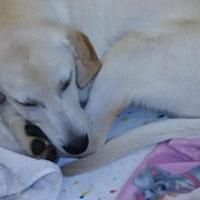 Adopt A Pet :: Leonard Orlando Chapter - Orlando, FL