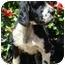 Photo 2 - Cocker Spaniel Dog for adoption in Sugarland, Texas - Willie