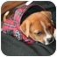 Photo 2 - Boxer Mix Puppy for adoption in Hainesville, Illinois - Baby Boy