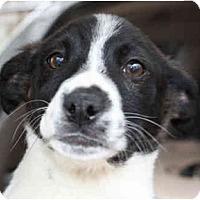 Adopt A Pet :: Keely-ADOPTED! - kennebunkport, ME