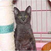 Adopt A Pet :: Blue - KANSAS, MO