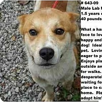 Adopt A Pet :: # 643-09 @ Animal Shelter - Zanesville, OH