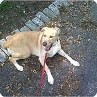 Adopt A Pet :: Pablo - Little Falls, NJ