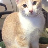 Adopt A Pet :: Nick - Modesto, CA