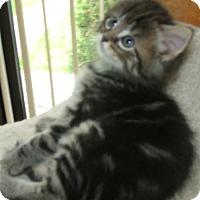 Adopt A Pet :: PRINCESS PEACH - Acme, PA