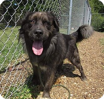 Shepherd (Unknown Type) Mix Dog for adoption in Flint, Michigan - Mystic Prince - Rescued