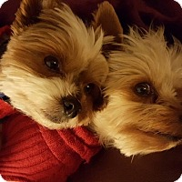 Adopt A Pet :: Tyler and Timmy - Los Angeles, CA