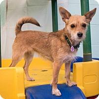 Adopt A Pet :: Olive - Eugene, OR
