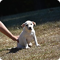 Adopt A Pet :: Lightning - South Dennis, MA