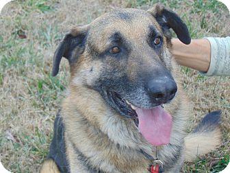 German Shepherd Dog Mix Dog for adoption in Portland, Maine - Lightning