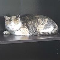 Adopt A Pet :: Starla - Albemarle, NC