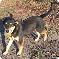 Adopt A Pet :: Baxter 💙 ADOPTED! - Saratoga Springs, NY