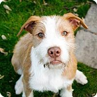Adopt A Pet :: Spindarella - Dayton, OH
