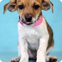 Adopt A Pet :: Cerittos - Waldorf, MD
