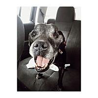 Adopt A Pet :: Willem Alexander - Orange, CA