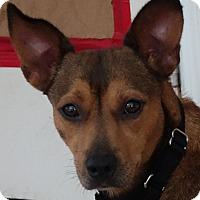 Adopt A Pet :: Serenity ~ Mellow - St Petersburg, FL
