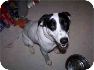 Blue Heeler Mix Dog for adoption in College Station, Texas - Tuesday
