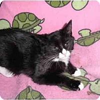 Adopt A Pet :: Chance - Warren, MI