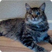 Adopt A Pet :: Marty - Elverta, CA