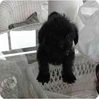 Adopt A Pet :: Smokey - Glastonbury, CT