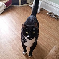Adopt A Pet :: Crimpy - Codorus, PA