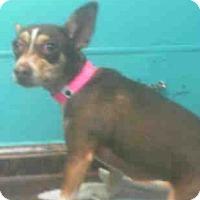 Adopt A Pet :: Sophie - Las Vegas, NV
