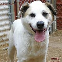 Adopt A Pet :: Rutger - Camden, DE