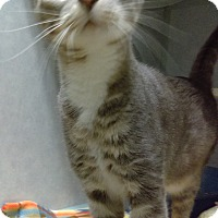 Adopt A Pet :: Smokey - Cody, WY