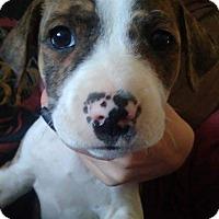 Adopt A Pet :: Rogan - Thousand Oaks, CA