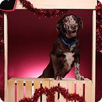 Adopt A Pet :: Amos - Jackson, TN