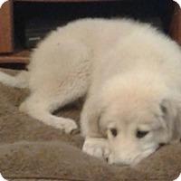 Adopt A Pet :: Sonny - Kyle, TX