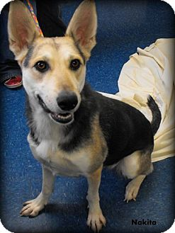 "German Shepherd Dog Mix Dog for adoption in MARION, Virginia - ""Nakita"""