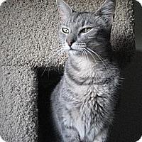 Adopt A Pet :: Sophie - Fresno, CA