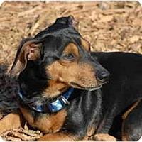 Adopt A Pet :: Hank - Ft. Myers, FL