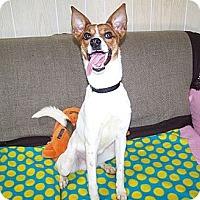 Adopt A Pet :: Jackson - Antioch, IL