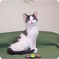 Adopt A Pet :: Berg - Secaucus, NJ