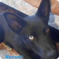 Adopt A Pet :: Maxwell - Arenas Valley, NM