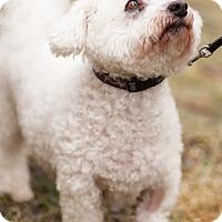 Adopt A Pet :: St. Jean - Toronto, ON