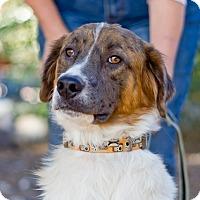 Adopt A Pet :: Geoffrey - Phoenix, AZ