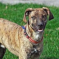 Adopt A Pet :: Cletus - Upper Sandusky, OH