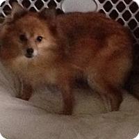 Adopt A Pet :: Savannah(adopted) - Butler, OH