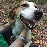 Adopt A Pet :: Chester - Simpsonville, SC