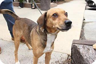 Hound (Unknown Type) Mix Dog for adoption in Greensboro, North Carolina - Job