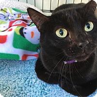 Adopt A Pet :: Nene - Foothill Ranch, CA