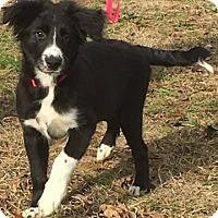 Adopt A Pet :: Clayhill-pending adoption - Manchester, CT